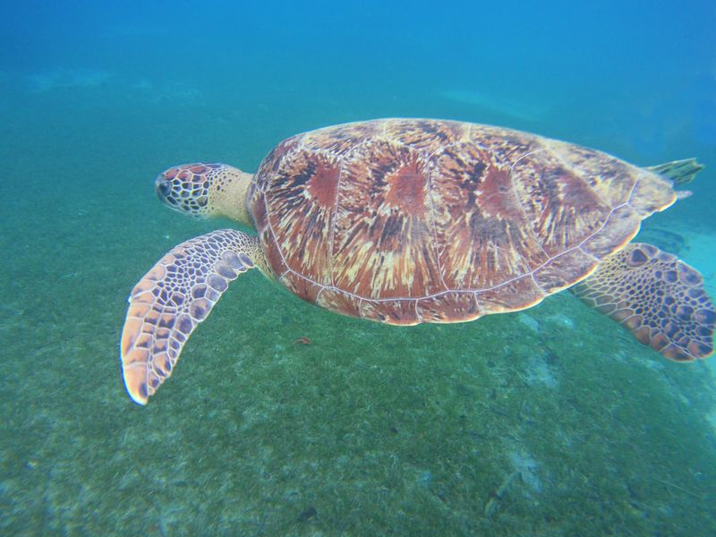 tortue anse dufour